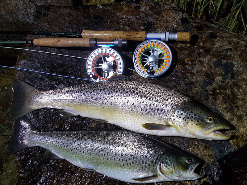 trout12